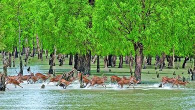Photo of Sundarbans site reopens for tourists
