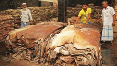 Photo of Industries Ministry moves to preserve rawhide