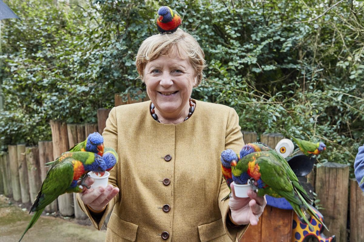 Merkel being attacked by bird during the election campaign