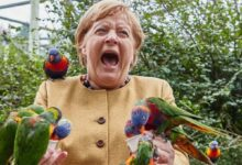 Photo of Merkel being attacked by bird during the election campaign